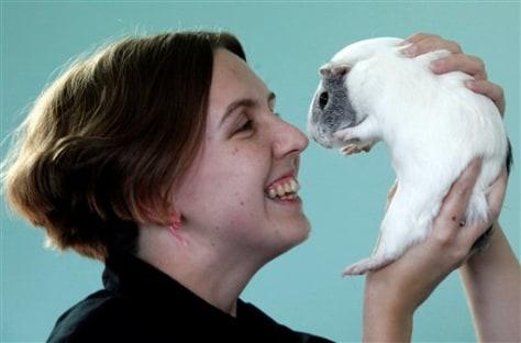 Guinea Pig Rescue