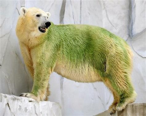Image:Green polar bears