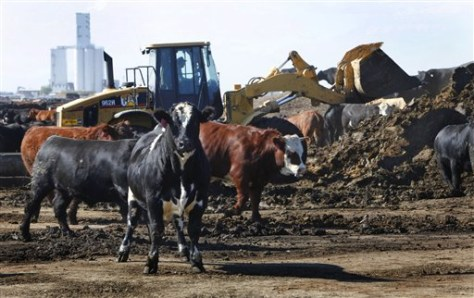 Image: Feed lot manure clean up