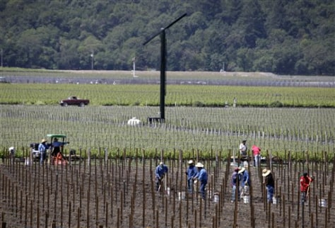Image: Workers in California vineyard