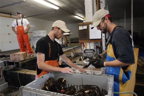 Image: Sorting lobsters