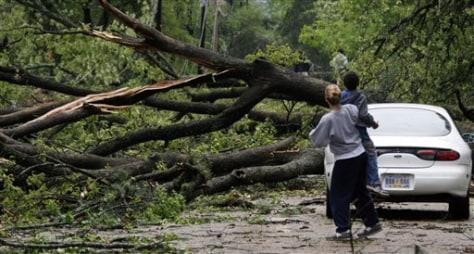 IMAGE: FALLEN TREE