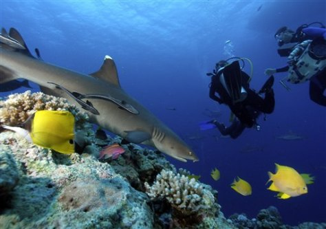 Image: Shark at reef
