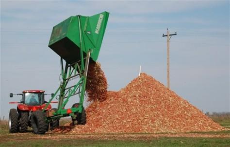 Image: Corn cobs