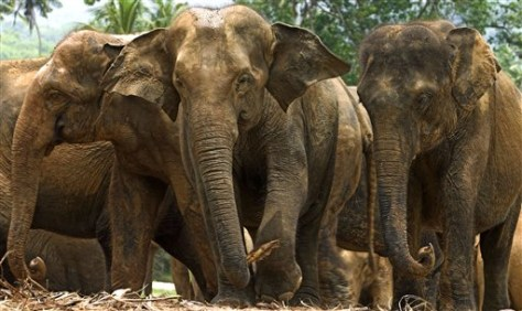 Image: Elephants inside Malaysian refuge