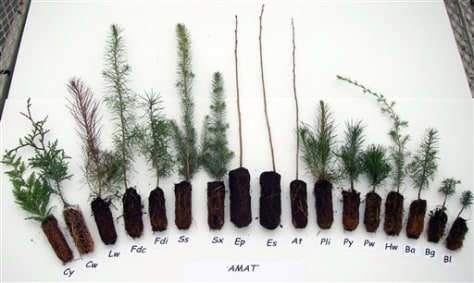 Image: Tree seedlings