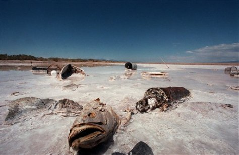 IMAGE: DEAD FISH IN SALTON SEA