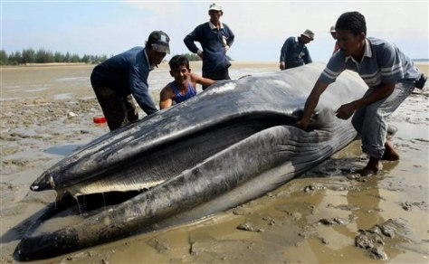 Image: Beached whale