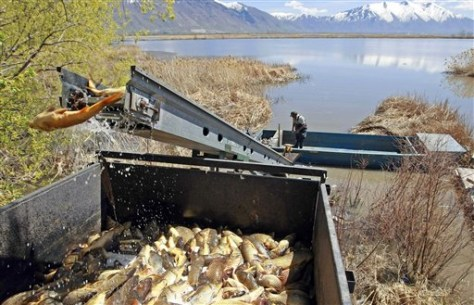 Image: Carp removed from lake