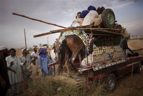 Image: Pakistan horse is loaded on van