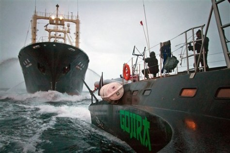 Image: Sea Shepherd  trimaran encounters Japanese whaling factory ship