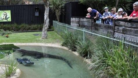 Crocodile Steals Zoo Worker S Lawn Mower World News
