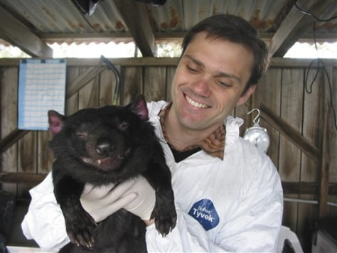 Image: Researcher and Tasmanian Devil