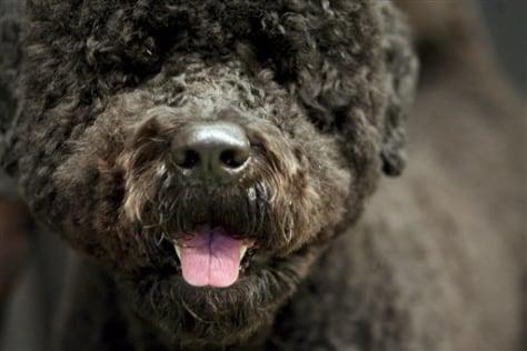 Pets Obama Dog
