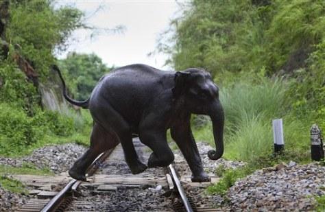 India Elephants