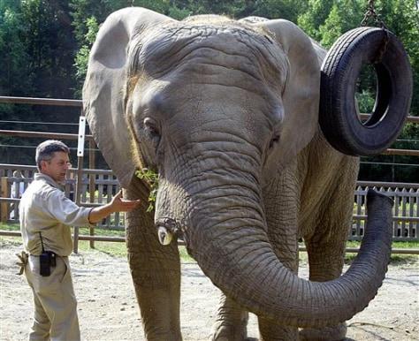 Alaska Elephant