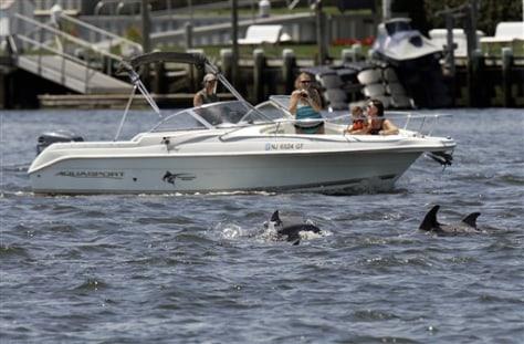 IMAGE: Wayward Dolphins