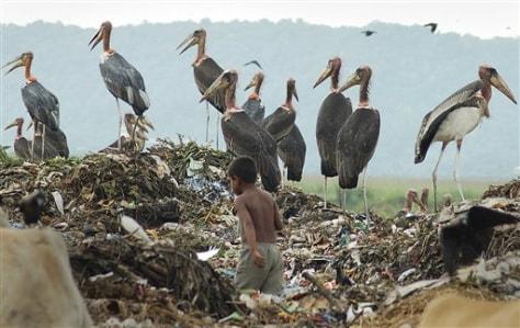 IMAGE: STORKS IN TRASH PILE