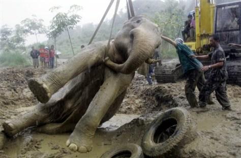IMAGE: ELEPHANT HOISTED UP