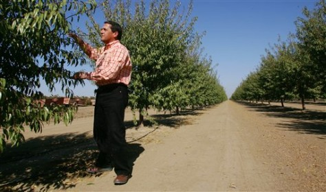 IMAGE: ALMOND GROWER