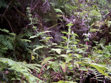 Endangered Plant Species
