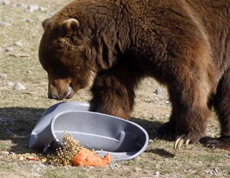 Image: Bear crushes garbage can