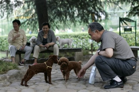 Image: A man plays with dogs at a Shanghai park