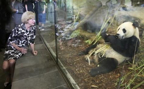 Image:Giant pandas