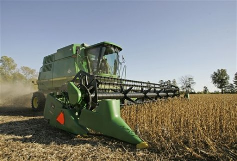Image: Soybean farm