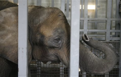 Elephant Assistance