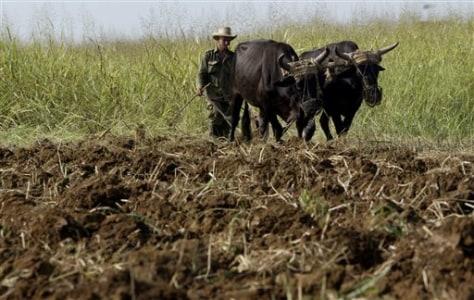 Image: Farmer Diosdado Mena works his oxen