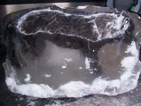 Image: A dead dog encased in ice