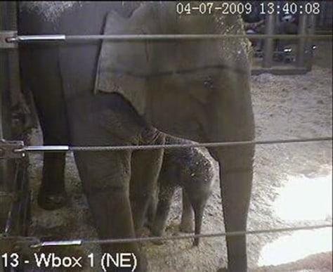 Image: Baby elephant