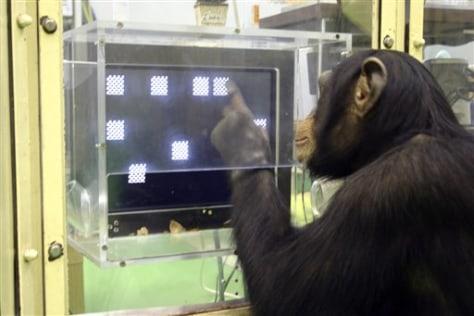 Image: Ayumu the chimpanzee