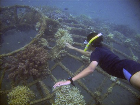 IMAGE: ARTIFICIAL METAL REEF