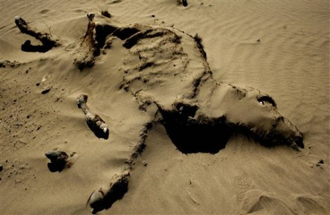 Image: Sand covers dead cow in drought area of Argentina