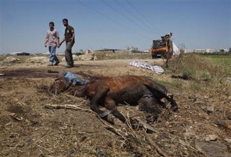 Image: Dead horse in Gaza