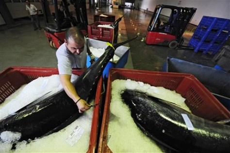 Image: Caught tunas