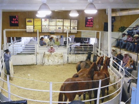 Image: Horses auctioned off