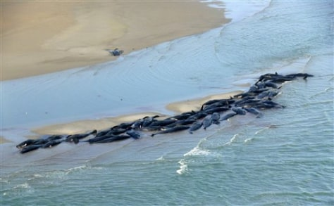 Image: Stranded whales