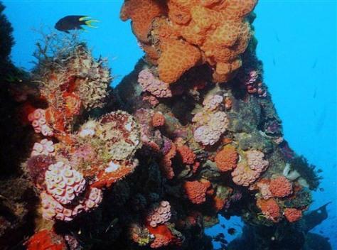 Image: Australia Coral Reefs
