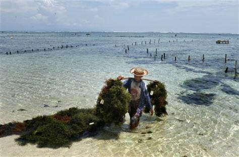 IMAGE: SEAWEED FARM
