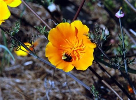 Image: Bumble bee