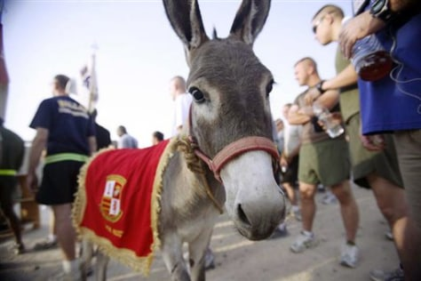 Image: Smoke the Donkey in Iraq
