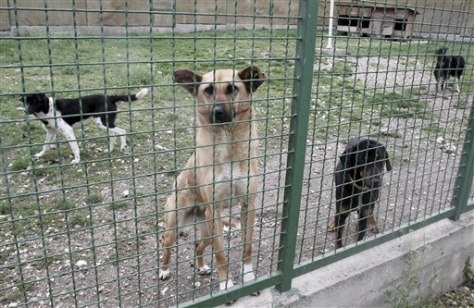 Image: Stray dogs at a shelter