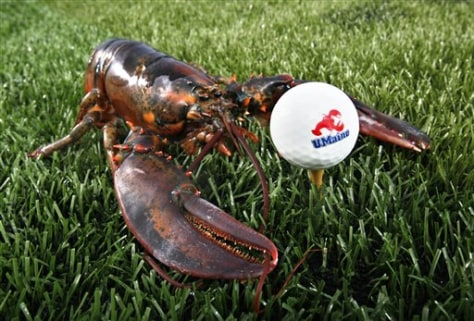 Image: Lobster golf ball
