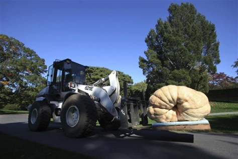Image: World's largest pumpkin on forklift