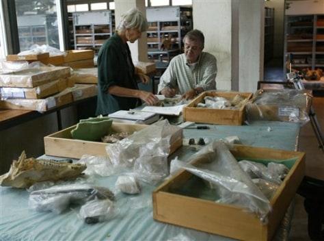 Image: Kenya fossils