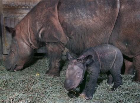 Image: Rhinos
