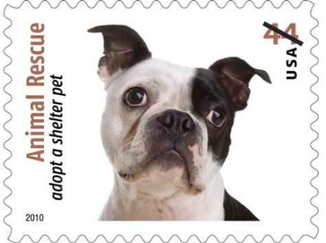 Image: Puppy stamp
